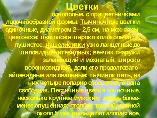 однополые, с прицветничками лодочкообразной формы. Тычиночные цветки одиночны...