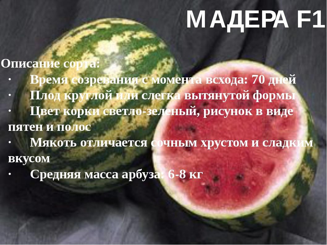 МАДЕРА F1 Описание сорта: ·Время созревания с момента всхода: 70 дней ·Плод...