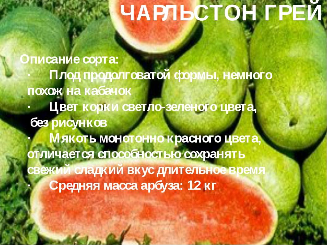 ЧАРЛЬСТОН ГРЕЙ Описание сорта: ·Плод продолговатой формы, немного похож на к...