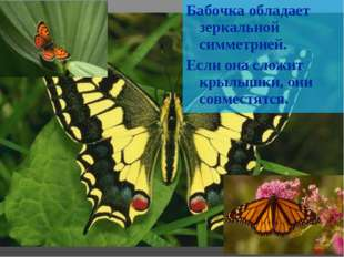 Бабочка обладает зеркальной симметрией. Если она сложит крылышки, они совмест