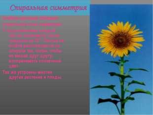 Стебель растения обладает спиральной осью симметрии. У подсолнечника каждый л