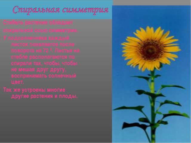 Стебель растения обладает спиральной осью симметрии. У подсолнечника каждый л...