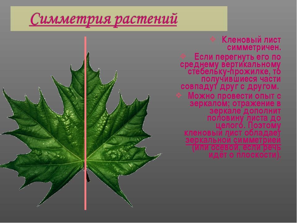Кленовый лист симметричен. Если перегнуть его по среднему вертикальному стебе...