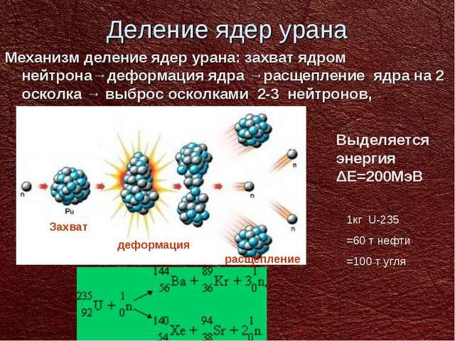 Деление ядер урана Механизм деление ядер урана: захват ядром нейтрона→деформа...