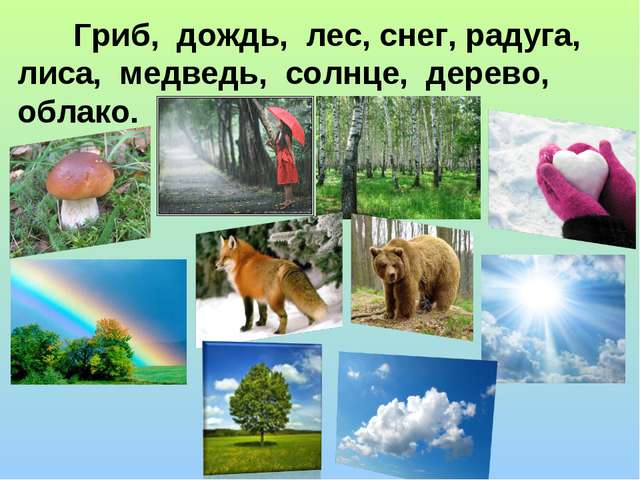 Гриб, дождь, лес, снег, радуга, лиса, медведь, солнце, дерево, облако.