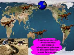 Отдельные кости и целые скелеты динозавров обнаружены учёными на всех контине