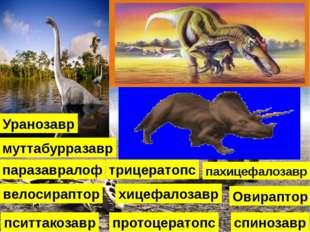 хицефалозавр Овираптор пахицефалозавр паразавралоф протоцератопс пситтакозавр