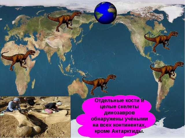 Отдельные кости и целые скелеты динозавров обнаружены учёными на всех контине...