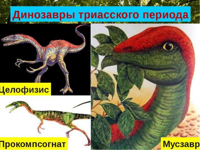 Динозавры триасского периода Целофизис Мусзавр Прокомпсогнат
