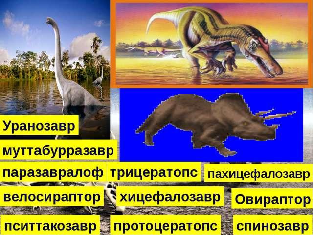 хицефалозавр Овираптор пахицефалозавр паразавралоф протоцератопс пситтакозавр...