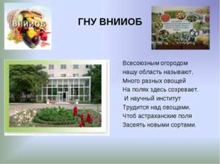 ГНУ ВНИИОБ Всесоюзным огородом нашу область называют, Много разных овощей На