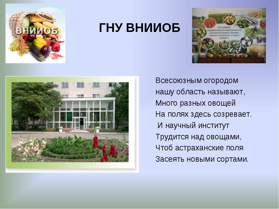 ГНУ ВНИИОБ Всесоюзным огородом нашу область называют, Много разных овощей На...