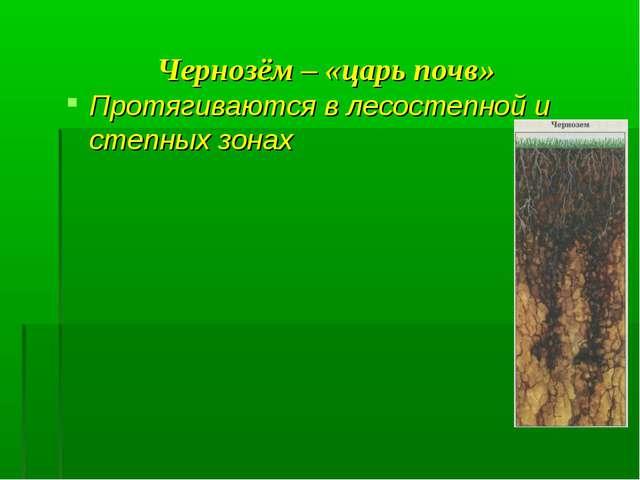 Чернозём – «царь почв» Протягиваются в лесостепной и степных зонах