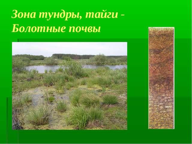 Зона тундры, тайги - Болотные почвы