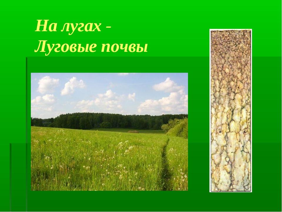 На лугах - Луговые почвы