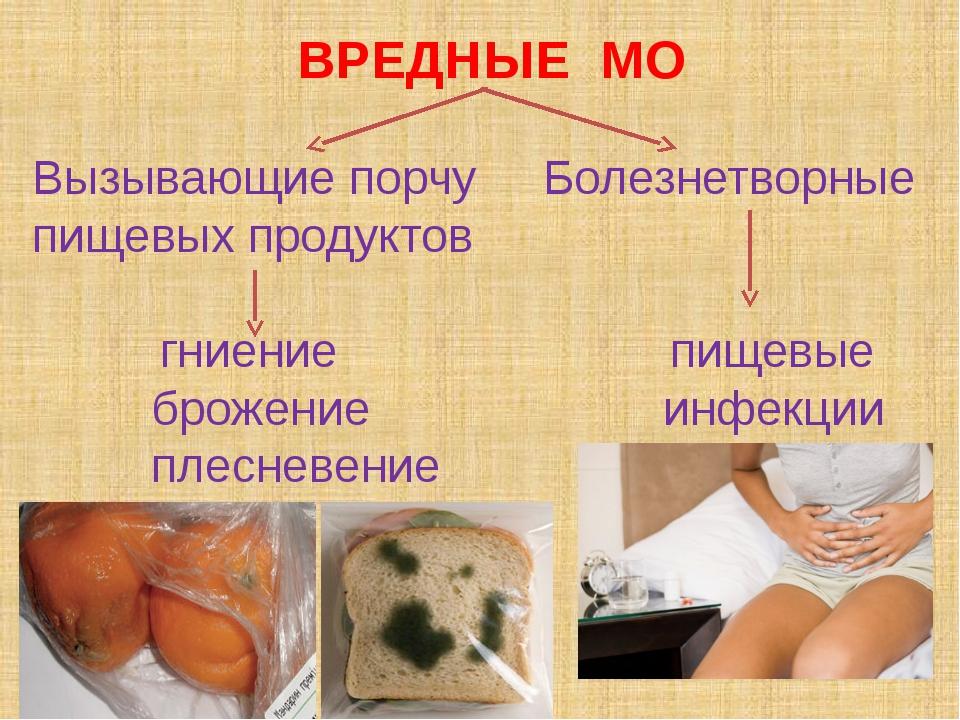 база бактерии вызывающие порчу мяса где