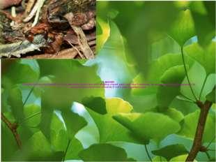 Қоректенуі Қоғамдық бұнақденелілер қоректің қорын көп дайындайды. Негізгі қо