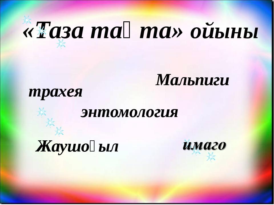 «Таза тақта» ойыны энтомология трахея Мальпиги Жаушоғыл