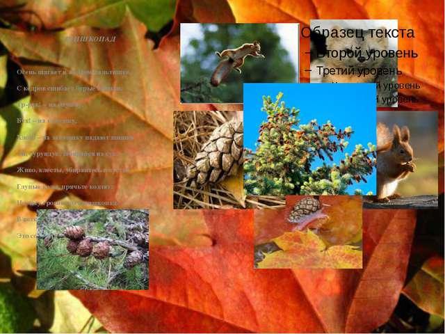 ШИШКОПАД Осень шагает в жёлтом пальтишке, С кедров сшибает бурые шишки. Тр-р...