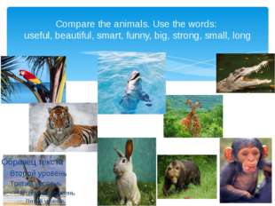 Compare the animals. Use the words: useful, beautiful, smart, funny, big, str