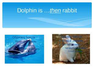 Dolphin is …then rabbit