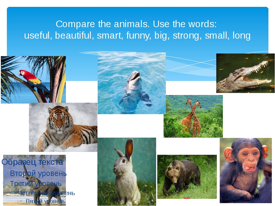 Compare the animals. Use the words: useful, beautiful, smart, funny, big, str...