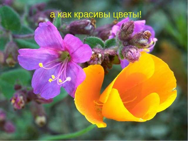 а как красивы цветы!