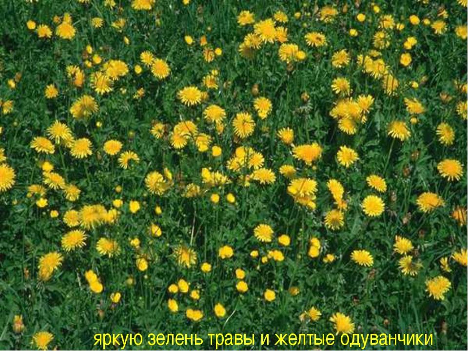 яркую зелень травы и желтые одуванчики
