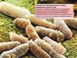 Неизвестные бактерии в пупке человека обнаружили ученые в США Результаты неда