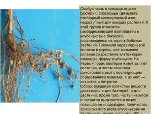 Особую роль в природе играют бактерии, способные связывать свободный молекуля