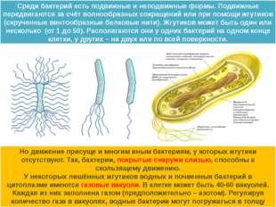 Среди бактерий есть подвижные и неподвижные формы. Подвижные передвигаются за
