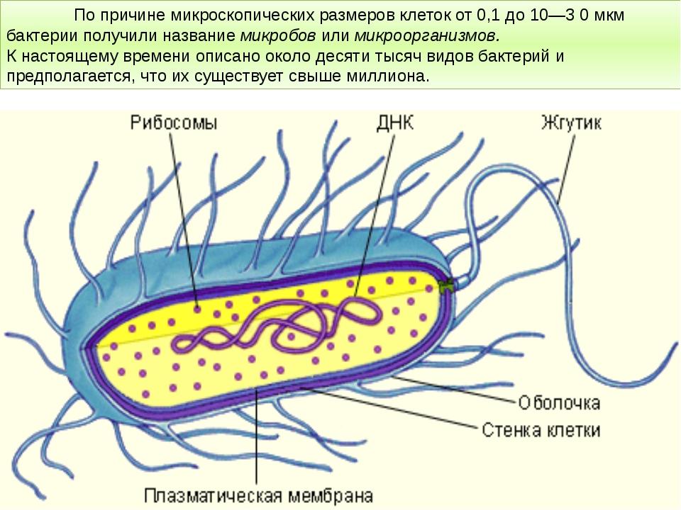 По причине микроскопических размеров клеток от 0,1 до 10—3 0 мкм бактерии...
