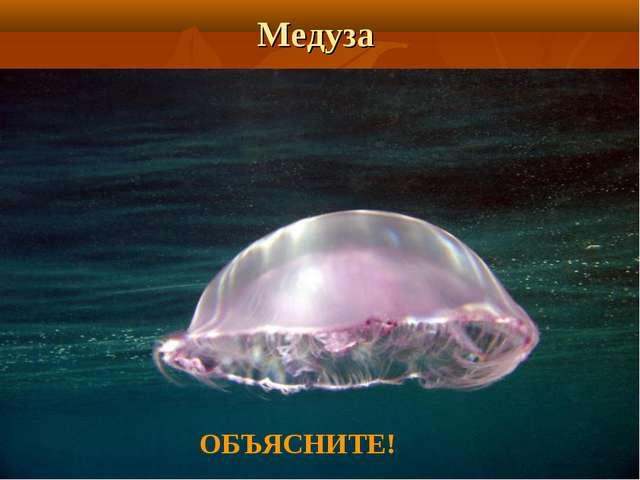 Медуза ОБЪЯСНИТЕ!
