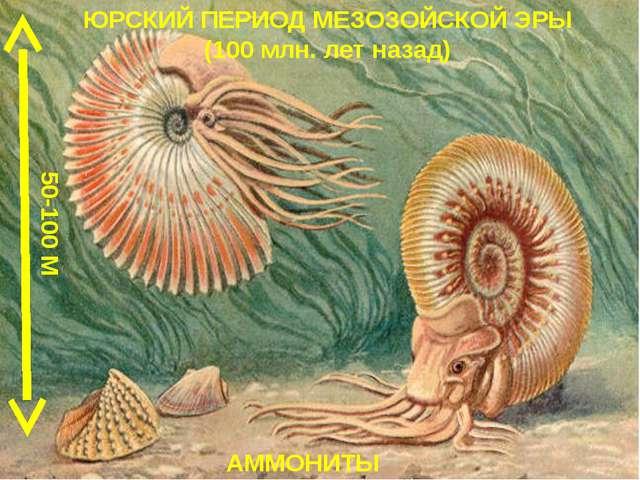 ЮРСКИЙ ПЕРИОД МЕЗОЗОЙСКОЙ ЭРЫ (100 млн. лет назад) АММОНИТЫ 50-100 М