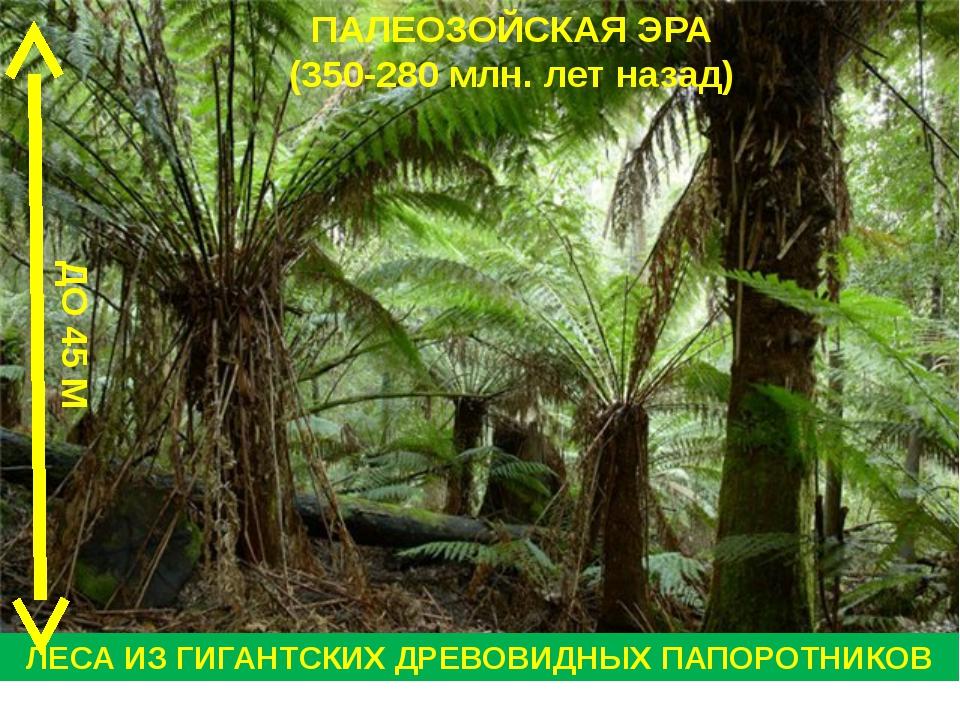 ПАЛЕОЗОЙСКАЯ ЭРА (350-280 млн. лет назад) ЛЕСА ИЗ ГИГАНТСКИХ ДРЕВОВИДНЫХ ПАПО...