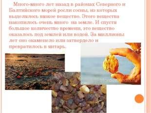 Много-много лет назад в районах Северного и Балтийского морей росли сосны, и