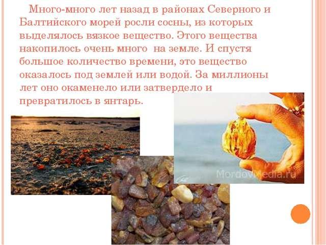 Много-много лет назад в районах Северного и Балтийского морей росли сосны, и...