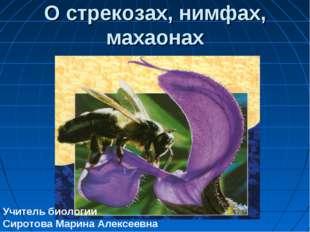 О стрекозах, нимфах, махаонах Учитель биологии Сиротова Марина Алексеевна