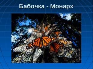 Бабочка - Монарх