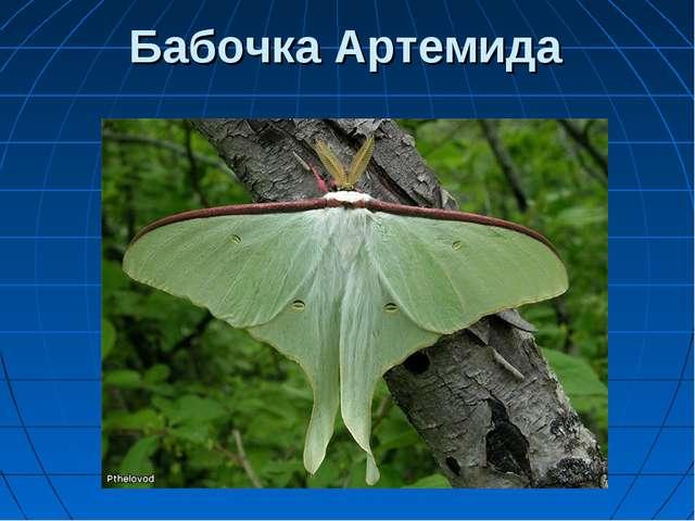 Бабочка Артемида