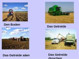 Den Boden pflügen Das Getreide säen Das Getreide mähen Das Getreide dreschen