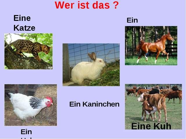 Wer ist das ? Eine Katze Eine Kuh Ein Hahn Ein Pferd Ein Kaninchen