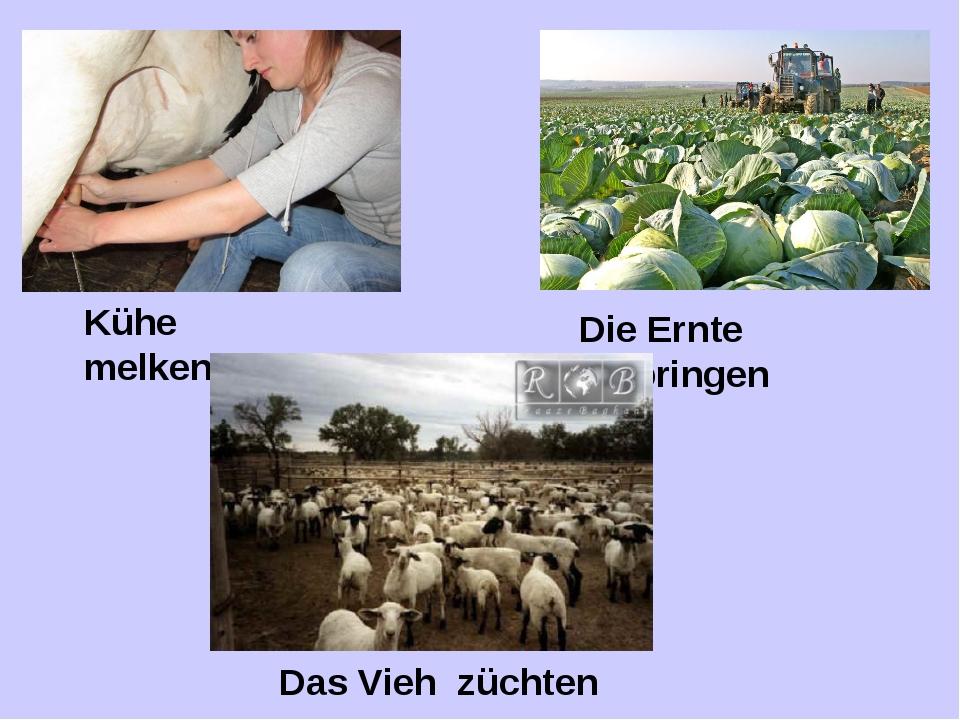 Kühe melken Die Ernte einbringen Das Vieh züchten