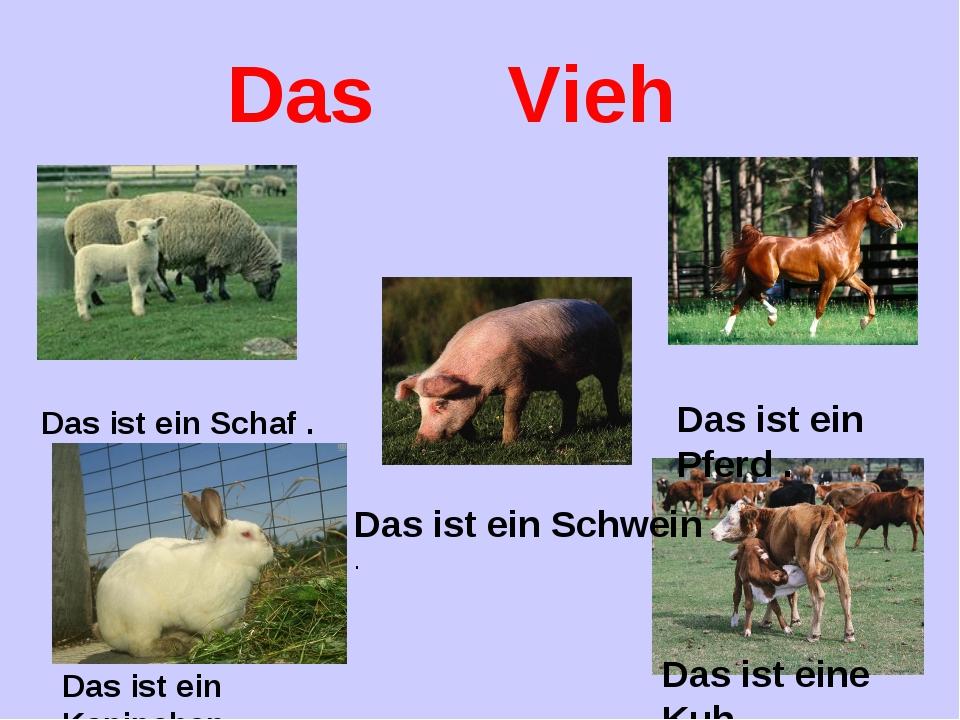 Das Vieh Das ist ein Schaf . Das ist ein Kaninchen . Das ist ein Pferd . Das...
