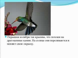 Перышки колибри так красивы, что похожи на драгоценные камни. На солнце они п