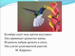 Колибри снуёт меж цветов неустанно- Она принимает душистые ванны. И вдоволь н