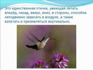 Это единственная птичка, умеющая летать вперёд, назад, вверх, вниз, в стороны