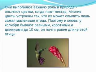 Они выполняют важную роль в природе - опыляют цветки, когда пьют нектар. Мног