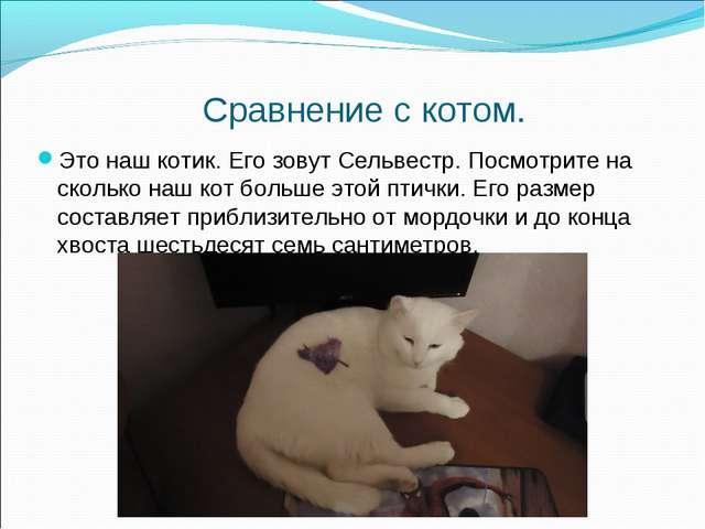 Сравнение с котом. Это наш котик. Его зовут Сельвестр. Посмотрите на сколько...