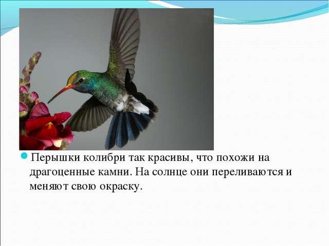 Перышки колибри так красивы, что похожи на драгоценные камни. На солнце они п...